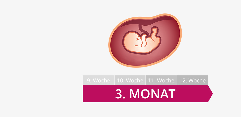 3 schwangerschaftsmonat mutter bauch baby im 3 monat. Black Bedroom Furniture Sets. Home Design Ideas