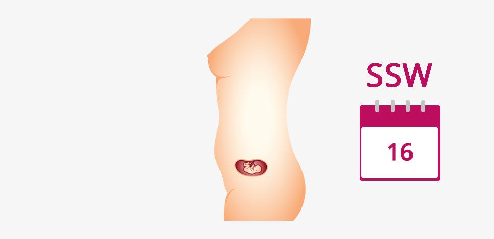 Harter Bauch Schwangerschaft 28 Ssw