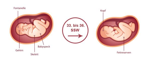 Überblick zur Entwicklung des Babys im 9. SSM