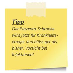 Tipp zur SSW 31: Plazenta