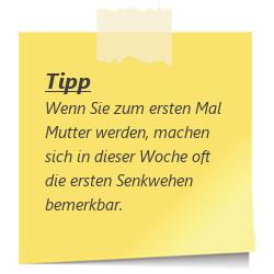 tipp_ssw33_Senkwehen.jpg