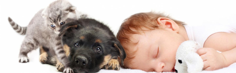 Babys Und Haustiere Tipps Fürs Zusammenleben